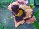 Avesome Blossom
